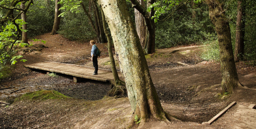 The History of Sutton Park